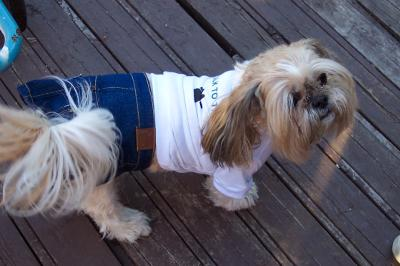 My dog Angel wearing a white T-shirt that says Talk to the Paw and a denim skirt.